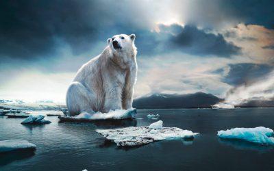 Reto Climático Cooperación GanamosReciclando y Centro Baloo.