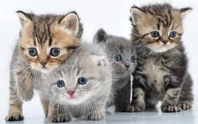 Seguros Mascotas